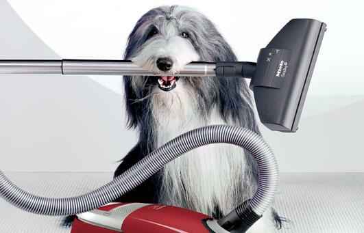 Miele C3: The Cat & Dog Vacuum (Reviews/Ratings/Prices)